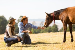 finding your horse
