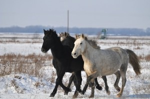 Horse Industry Rebounding