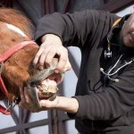Man Taking Care of a Horse