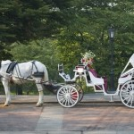 NYC Horse Carriage