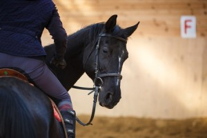 Reasons for Horse Behavior Problems