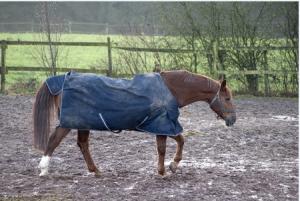 Horses in Spring Season