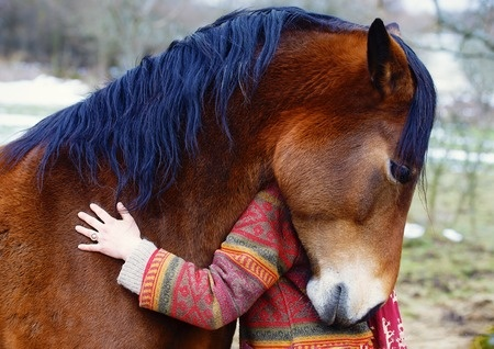 Aging Horse Care