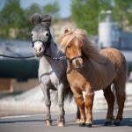 In Arizona, Miniature Horses Will Soon Become Service Animals