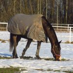 Preparing Your Horses for The Cold Months of Winter