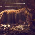 Sick Horses
