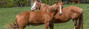 Foal News