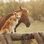 Animal Companionship Tips