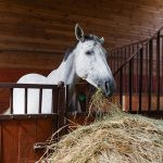 How to Change Your Horse's Feed