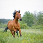 Transition into Spring With Your Horse