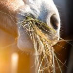 Horse Dietary Tips