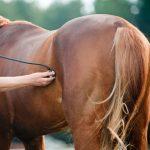 Horse Vet Bills