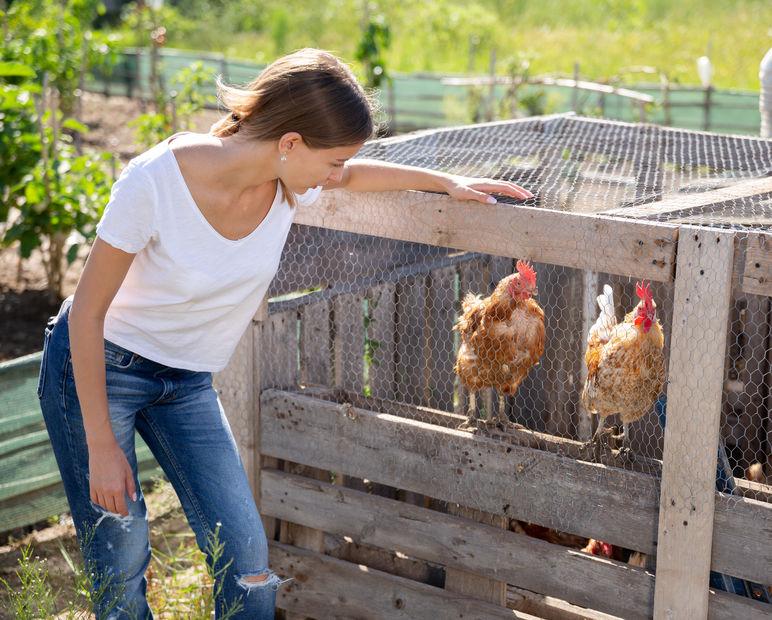 Prefab Chicken Coops for Sale near Houston TX