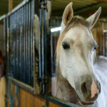 Prefab Horse Barns for Sale in Texas