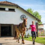Prefab Horse Barns for Sale in Texas