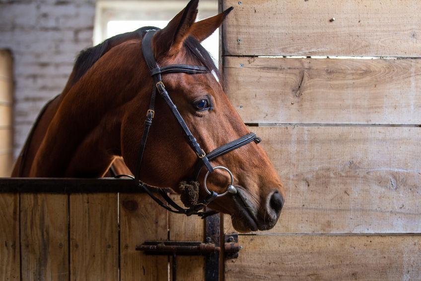 Pre-Built Portable Horse Barns in Texas